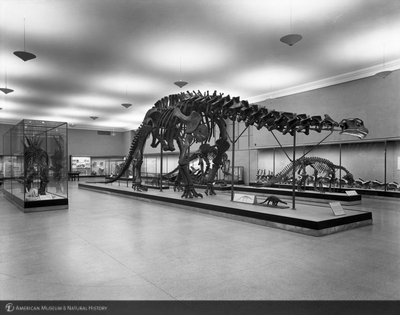 http://images.library.amnh.org/d/t/8x10/0001/00315932_l.jpg