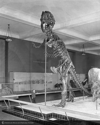 http://images.library.amnh.org/d/t/8x10/0002/00327524_l.jpg