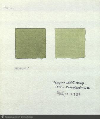 http://lbry-web-002.amnh.org/san/mo_exhibition/art002_b1_08.jpg