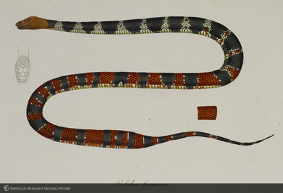 http://lbry-web-002.amnh.org/san/naturalhistories/b10663848_4.jpg