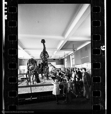 http://lbry-web-002.amnh.org/san/to_upload/35mm_halls_new/602864_06.jpg
