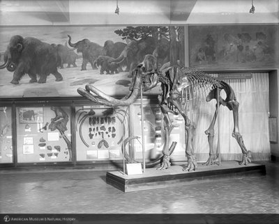 http://images.library.amnh.org/d/t/8x10/0001/00039131_l.jpg