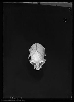 http://lbry-web-002.amnh.org/san/to_upload/5x7/19095.jpg
