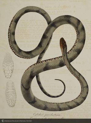 http://lbry-web-002.amnh.org/san/naturalhistories/b10663848_6.jpg