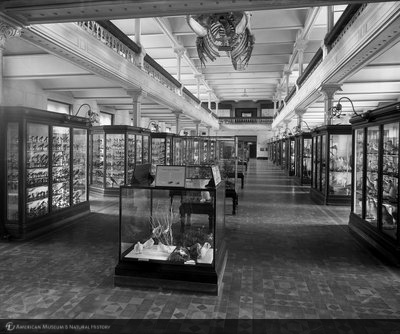 http://images.library.amnh.org/d/t/8x10/0001/00031462_l.jpg