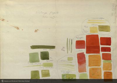 http://lbry-web-002.amnh.org/san/mo_exhibition/art002_b1_04.jpg