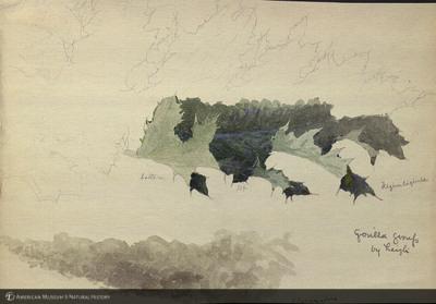 http://lbry-web-002.amnh.org/san/mo_exhibition/art002_b1_14.jpg
