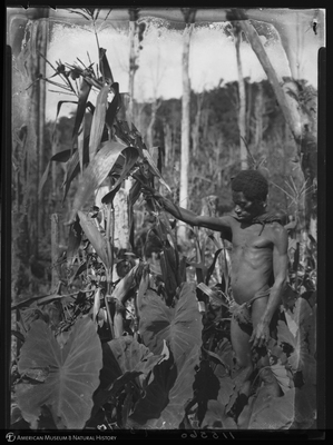 http://lbry-web-002.amnh.org/san/to_upload/Beck-PapuaNewGuinea/NG-5x7-negs/115560.jpg