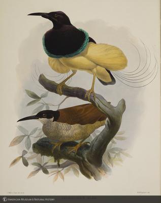 http://lbry-web-002.amnh.org/san/naturalhistories/b10610169_1.jpg
