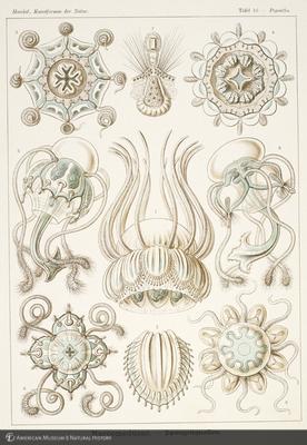 http://lbry-web-002.amnh.org/san/naturalhistories/b10528283_3.jpg