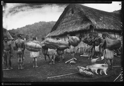 http://lbry-web-002.amnh.org/san/to_upload/Beck-PapuaNewGuinea/NG-5x7-negs/115743.jpg