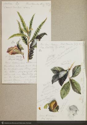 http://lbry-web-002.amnh.org/san/to_upload/titianbutterflies/b1179161_42.jpg