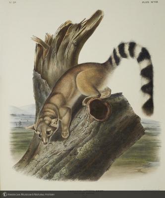 http://lbry-web-002.amnh.org/san/naturalhistories/b10621283_6.jpg