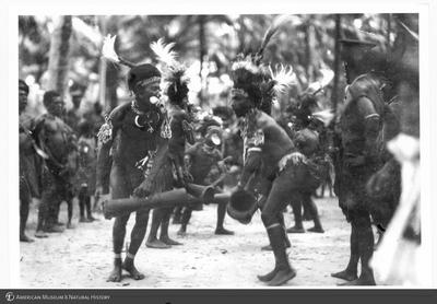 http://lbry-web-002.amnh.org/san/to_upload/Beck-PapuaNewGuinea/NG-5x7-prints/115668.jpg