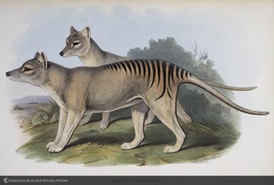 http://lbry-web-002.amnh.org/san/naturalhistories/b10303133_3.jpg