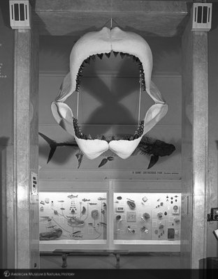 http://images.library.amnh.org/d/t/8x10/0001/00323031_l.jpg