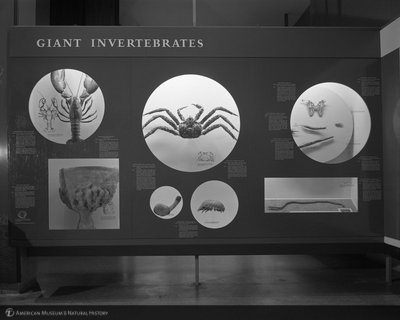 http://images.library.amnh.org/d/t/4x5/0001/02A10408_l.jpg