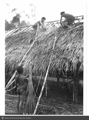 http://lbry-web-002.amnh.org/san/to_upload/Beck-PapuaNewGuinea/NG-5x7-prints/115735.jpg