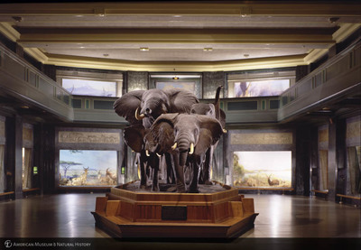 http://lbry-web-002.amnh.org/san/to_upload/photostudio/SF_Elephants.jpg