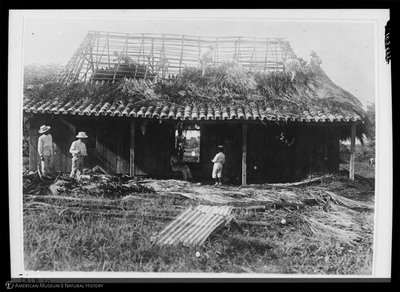 Thatching house with palm fronds, Cuba, 1918