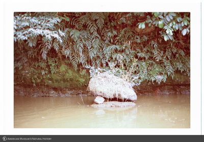 http://lbry-web-002.amnh.org/san/photoprintcollections/Arth/ppc-a78-100213279-17.jpg