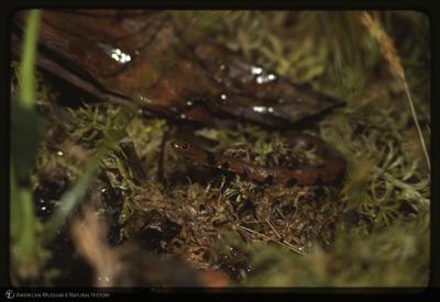 http://lbry-web-002.amnh.org/san/to_upload/35mm/K11306.jpg