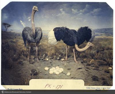 http://lbry-web-002.amnh.org/san/AMNH_postcards/100213323_50.jpg
