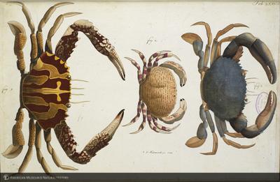 http://lbry-web-002.amnh.org/san/naturalhistories/b11448969_3.jpg