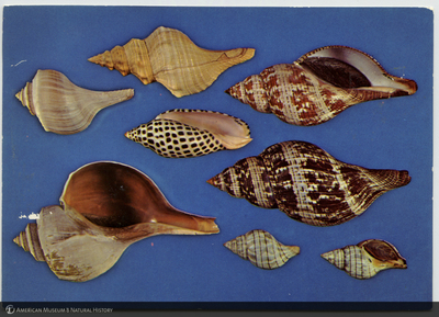http://lbry-web-002.amnh.org/san/AMNH_postcards/100213323_43.jpg