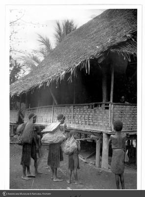 http://lbry-web-002.amnh.org/san/to_upload/Beck-PapuaNewGuinea/NG-5x7-prints/115631.jpg