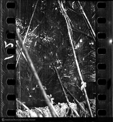 http://lbry-web-002.amnh.org/san/to_upload/35mm/VHC-W012.jpg