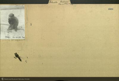 http://lbry-web-002.amnh.org/san/mo_exhibition/ppc_532_b15_f153_002.jpg