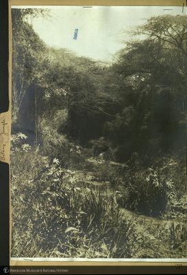 http://lbry-web-002.amnh.org/san/mo_exhibition/ppc_532_b25_f229_006.jpg