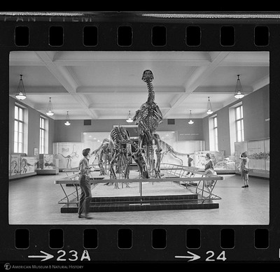 http://lbry-web-002.amnh.org/san/to_upload/35mm_halls_new/602864_24.jpg