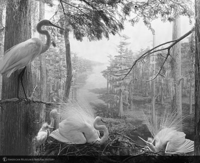http://images.library.amnh.org/d/t/8x10/0002/00331854_l.jpg