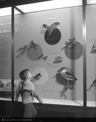 http://images.library.amnh.org/d/t/4x5/0001/002A6536_l.jpg