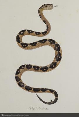 http://lbry-web-002.amnh.org/san/naturalhistories/b10663848_5.jpg
