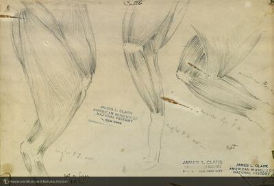 http://lbry-web-002.amnh.org/san/mo_exhibition/art001_b2_13.jpg
