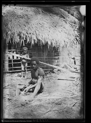 http://lbry-web-002.amnh.org/san/to_upload/Beck-PapuaNewGuinea/NG-5x7-negs/115534.jpg