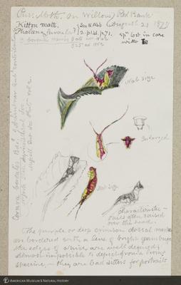 http://lbry-web-002.amnh.org/san/to_upload/titianbutterflies/b1179161_51.jpg
