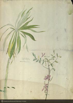 http://lbry-web-002.amnh.org/san/mo_exhibition/art003_b2_30.jpg