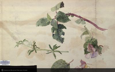 http://lbry-web-002.amnh.org/san/mo_exhibition/art002_b1_24v.jpg