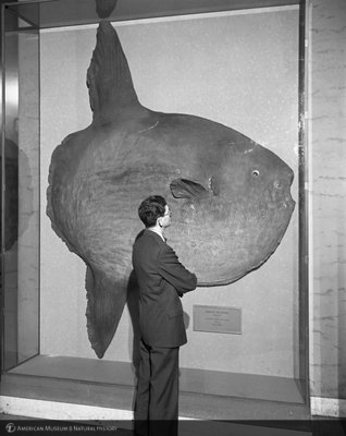http://images.library.amnh.org/d/t/8x10/0001/00320512_l.jpg