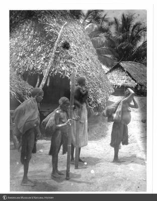 http://lbry-web-002.amnh.org/san/to_upload/Beck-PapuaNewGuinea/NG-5x7-prints/115635.jpg