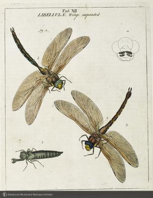 http://lbry-web-002.amnh.org/san/naturalhistories/b12055384_4.jpg