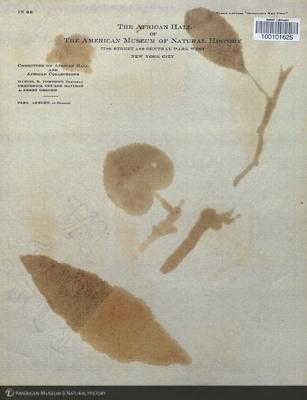http://lbry-web-002.amnh.org/san/mo_exhibition/art002_b2_14v.jpg
