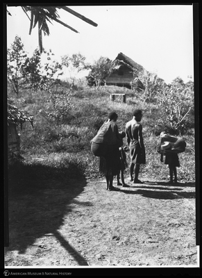 http://lbry-web-002.amnh.org/san/to_upload/Beck-PapuaNewGuinea/NG-5x7-negs/115582.jpg