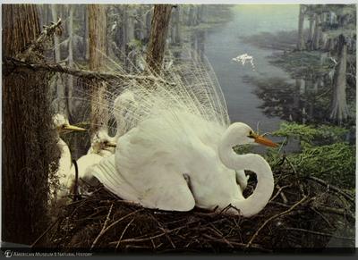 http://lbry-web-002.amnh.org/san/AMNH_postcards/100213323_44.jpg