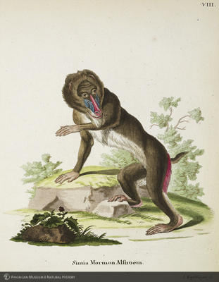 http://lbry-web-002.amnh.org/san/naturalhistories/b10764136_5.jpg