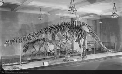 http://images.library.amnh.org/d/t/8x10/0002/00311979_l.jpg